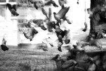 Flying pigeons by photogatar