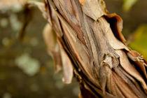 Bark Veil von lotusaqua