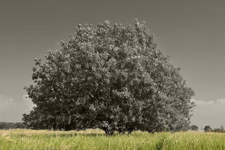Baum-7-dot-2