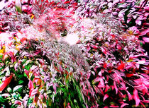 Virtual-flowers