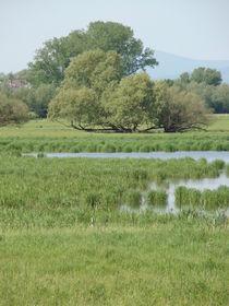 Naturaufnahmen-mai-2012-017