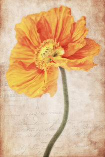Bella orange by AD DESIGN Photo + PhotoArt