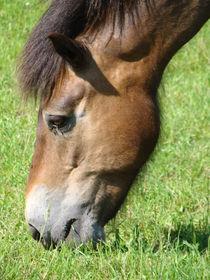 Pferd von Ka Wegner