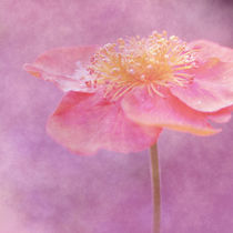 Harmonie in pink von Christine Bässler
