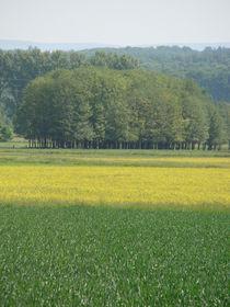 Rapsfeld im Frühling von Ka Wegner