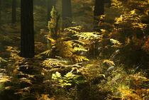 Gold ferns von photogatar