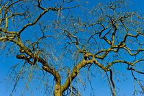 wintertag in blau by helmut krauß