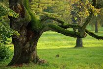 Trees die standing von photogatar