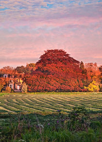 Lowthorpe Sunset by David  Hollingworth