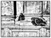 Tauben am Markusplatz von Matthias Töpfer