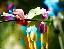 Colors von Agnieszka  Grodzka