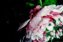 pink by Agnieszka  Grodzka