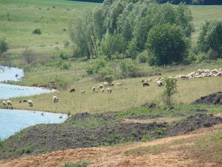 Naturaufnahmen-mai-2012-285