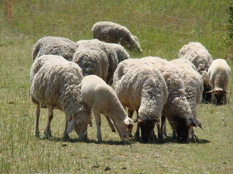 Naturaufnahmen-mai-2012-336
