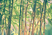 Japanese bamboo forest by Tobias Pfau
