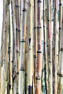 old damaged bamboo texture von Tobias Pfau