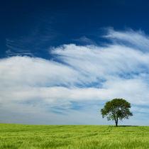 Einsamer Baum von Jürgen Mayer