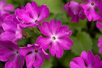Wonderland von lotusaqua