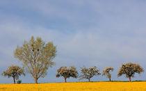 Blütenlandschaft by Wolfgang Dufner