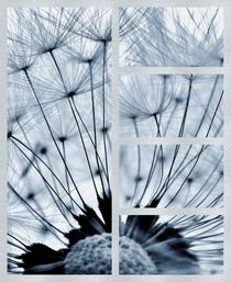 Dandelion Collage by Julia Delgado