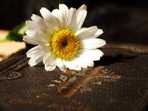 Flower Vintage von Julia Delgado
