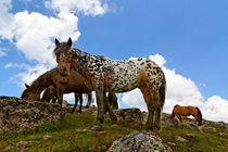 Pferde am Gipfel by Wolfgang Dufner