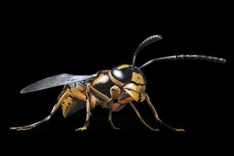 Hornetbranca-black