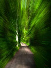 Waldspaziergang no. 1 von arteralfo