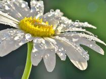 Dreams of a flower by Julia Delgado