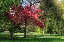 Frühling im Park von Wolfgang Dufner