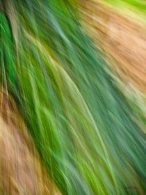 Waldspaziergang no. 11 von arteralfo