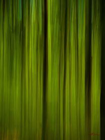 Waldspaziergang no. 17 von arteralfo
