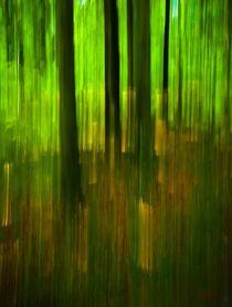 Waldspaziergang no. 19 von arteralfo