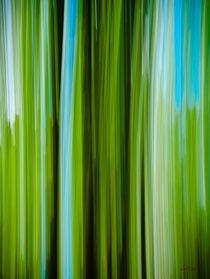 Waldspaziergang no. 20 von arteralfo