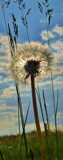 Pusteblume im Gegenlicht by Julia Delgado