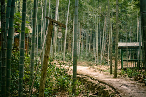 Ch-bamboo-forest-img-5256