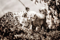 'Cheetah Mom with her babies' by Maggy Meyer