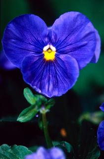 was bin ich bloss heute blau! by helmut krauß