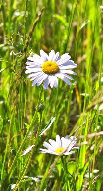 Frühlingswiese by Julia Delgado