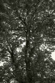 Baum im Frühling - Tree in Spring von ropo13