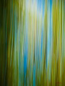 Waldspaziergang no. 21 von arteralfo