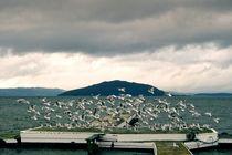 Seagulls von Stas Kulesh