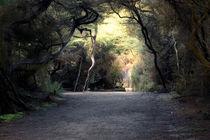 Rotorua Forest by Stas Kulesh