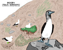 Blue footed Booby by Benjamin Long