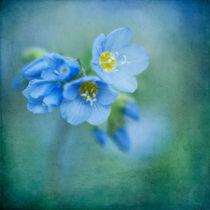 Blauebluem