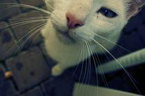 Cat von Frank Walker