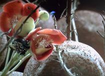 Natur pur 1 von Heide Pfannenschwarz