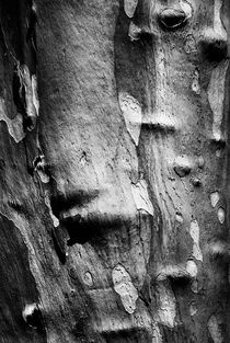 The skin tree  by Jaromir Hron