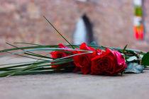 Hannover Roses by Sandra Capljak