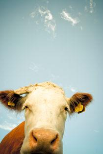 Curious Cow von Lars Hallstrom